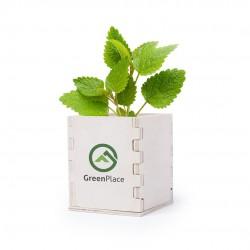 Pot de fleurs biodégradable et personnalisable
